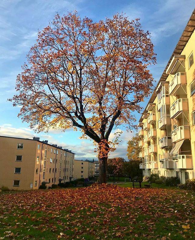 Autumn at Manglerud 😊 #oslo #visitoslo Photo: @annnesofies ift.tt/35JeMm2