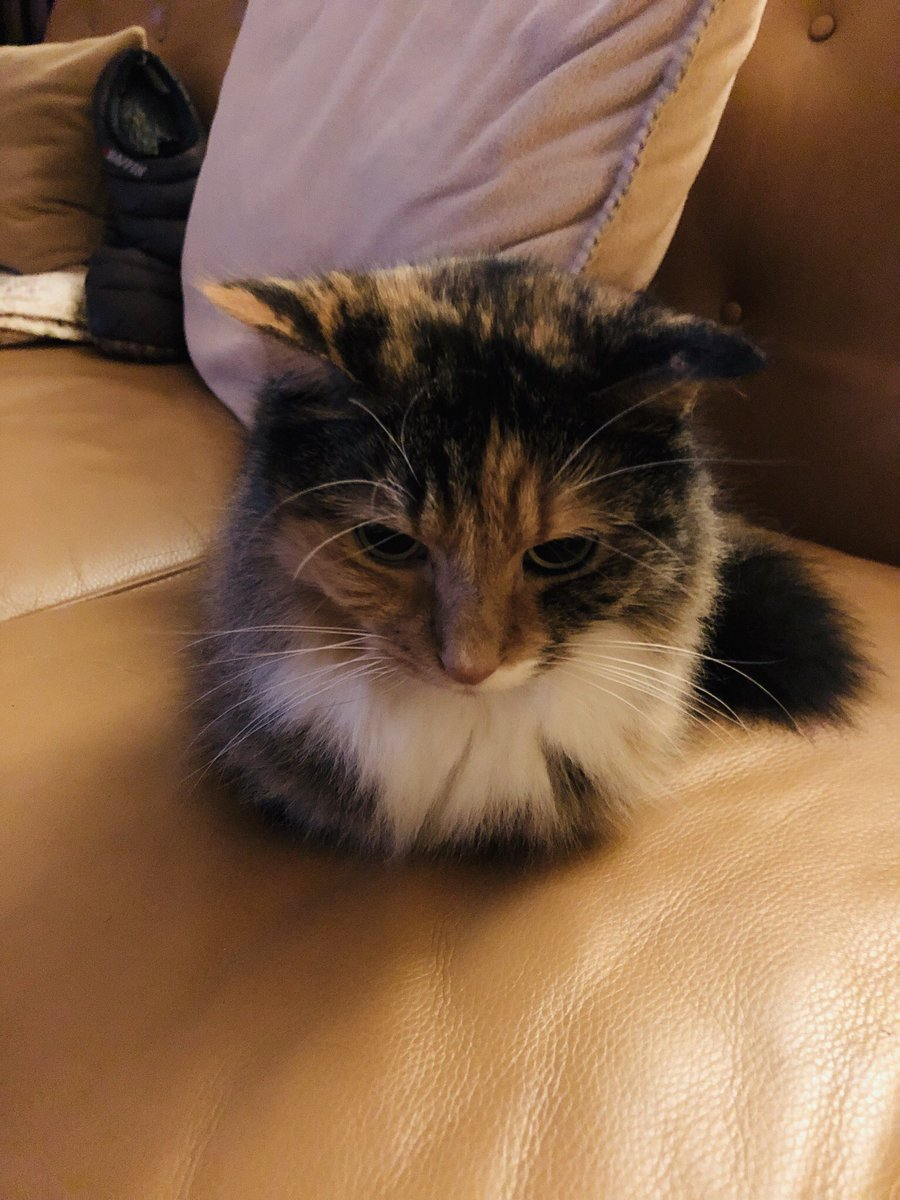 Mac The Cat On Twitter It S Globalcatday And Nationalbossday On The Same Day Coincidence Cats Think Not Catsoftwitter