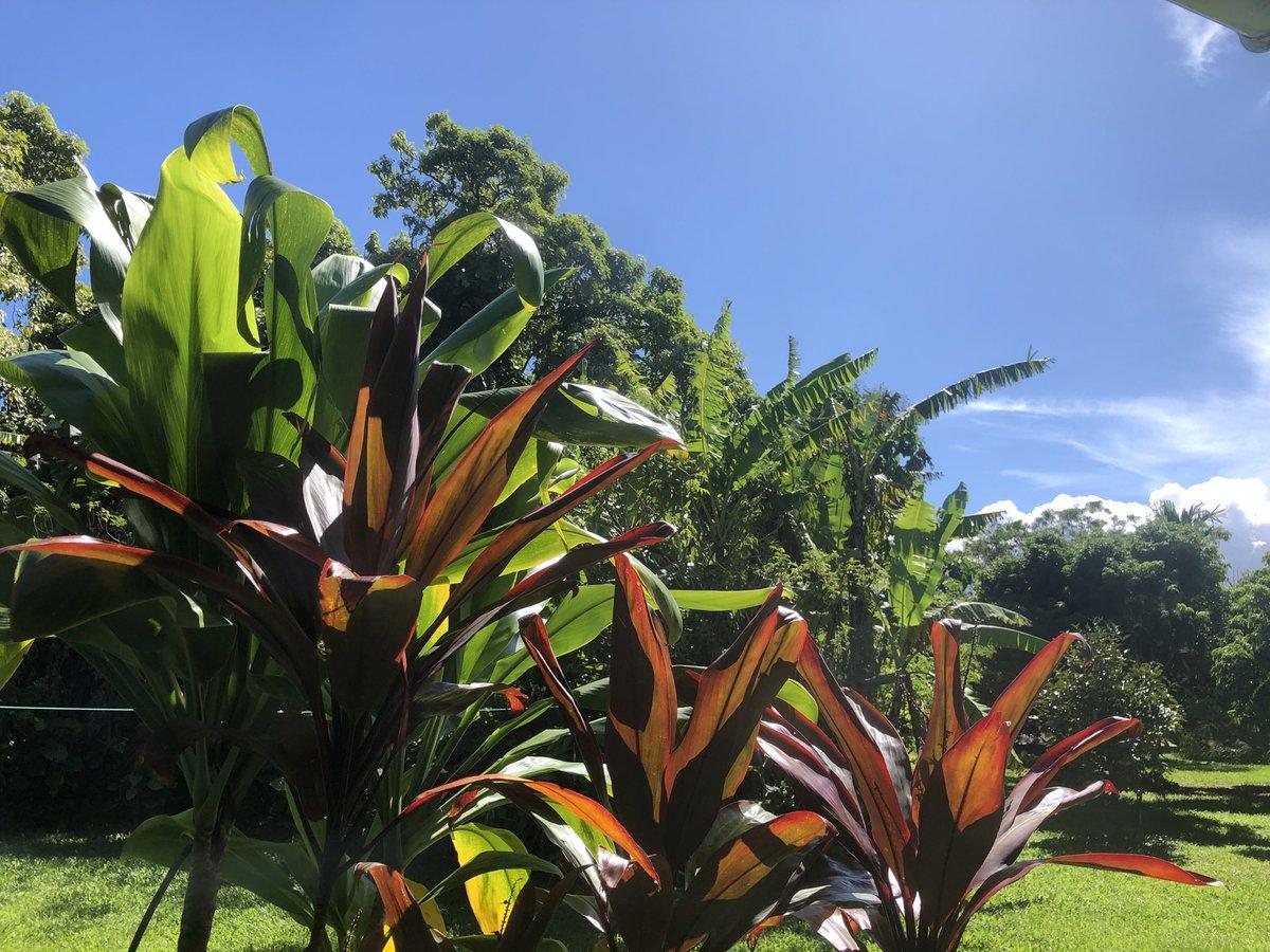 test Twitter Media - Gorgeous breezy day in Haiku. #cmweather #Maui #Mauinokaoi https://t.co/KeuNi6iPxE
