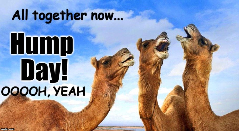 🐫🐫🐫#HumpDayMotivation #HumpDayVibes🐪🐪🐪#HumpDayTreat🐫💋#WritetheTruth📜#WednesdayWisdom#WednesdayMotivation#WriterWednesday #Writerslife#HumpDayHappiness#SavetheHump🐫#WritingCommunity#WednesdayFeeling#WednesdayThoughts#Writers🐪#WW#HumpDay🐫💖#HumpDayHumor😎🐫