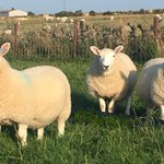 Image for the Tweet beginning: Looking forward to speaking on