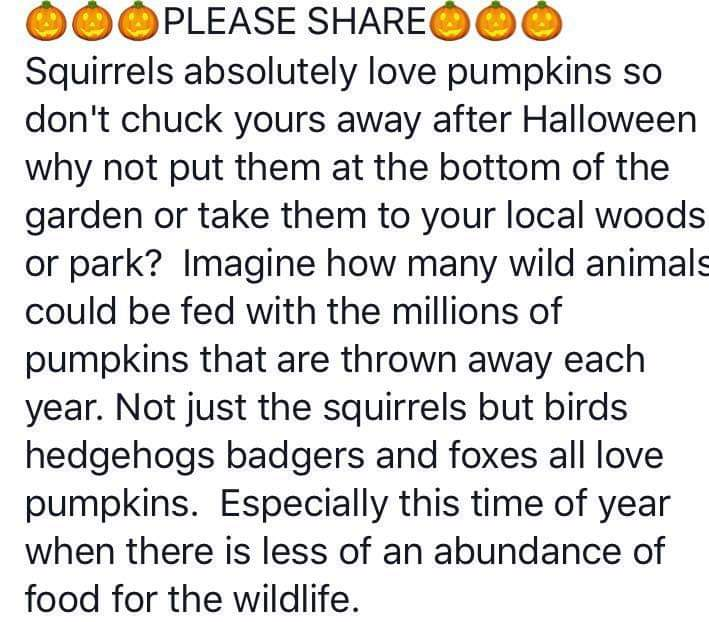 Remember not to throw away your pumpkins this year, if you dont make a curry/soup or you have left overs be sure leave them out for the wildlife to enjoy. ☺️ #Vegan #Halloween