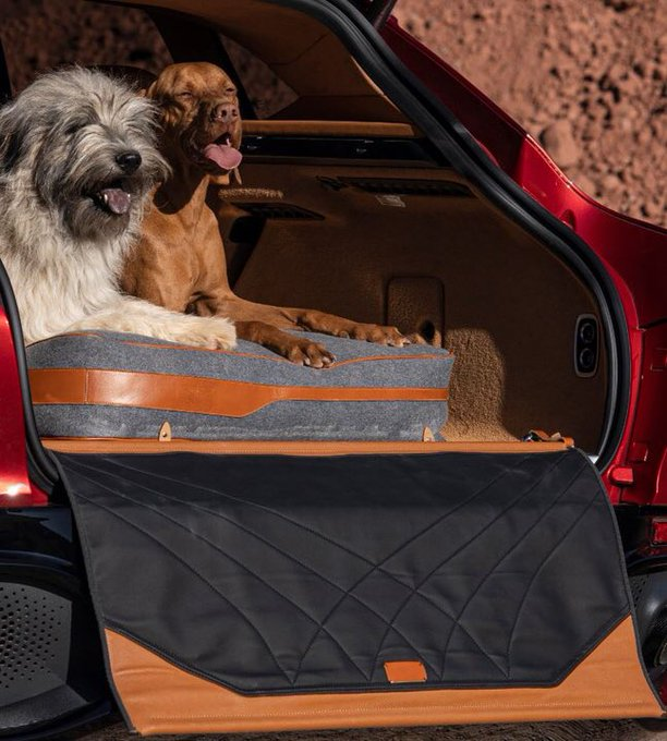 Dogs not included (unfortunately). #DBX…
