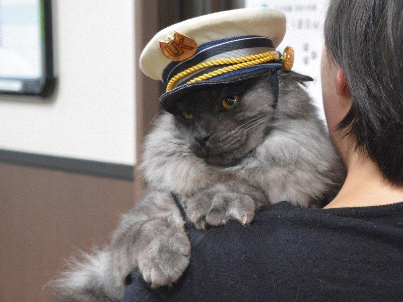 迷い猫「しょこら」駅長に就任 JR羽前小松駅|BIGLOBEニュース