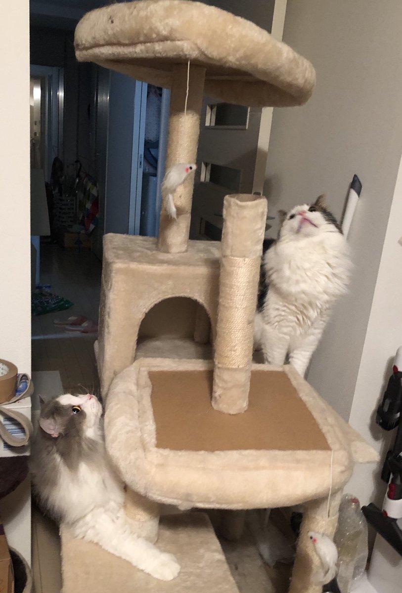 こわれ猫タワーをわっしょいわっしょい捨ててきました〜〜一年はもった…か…