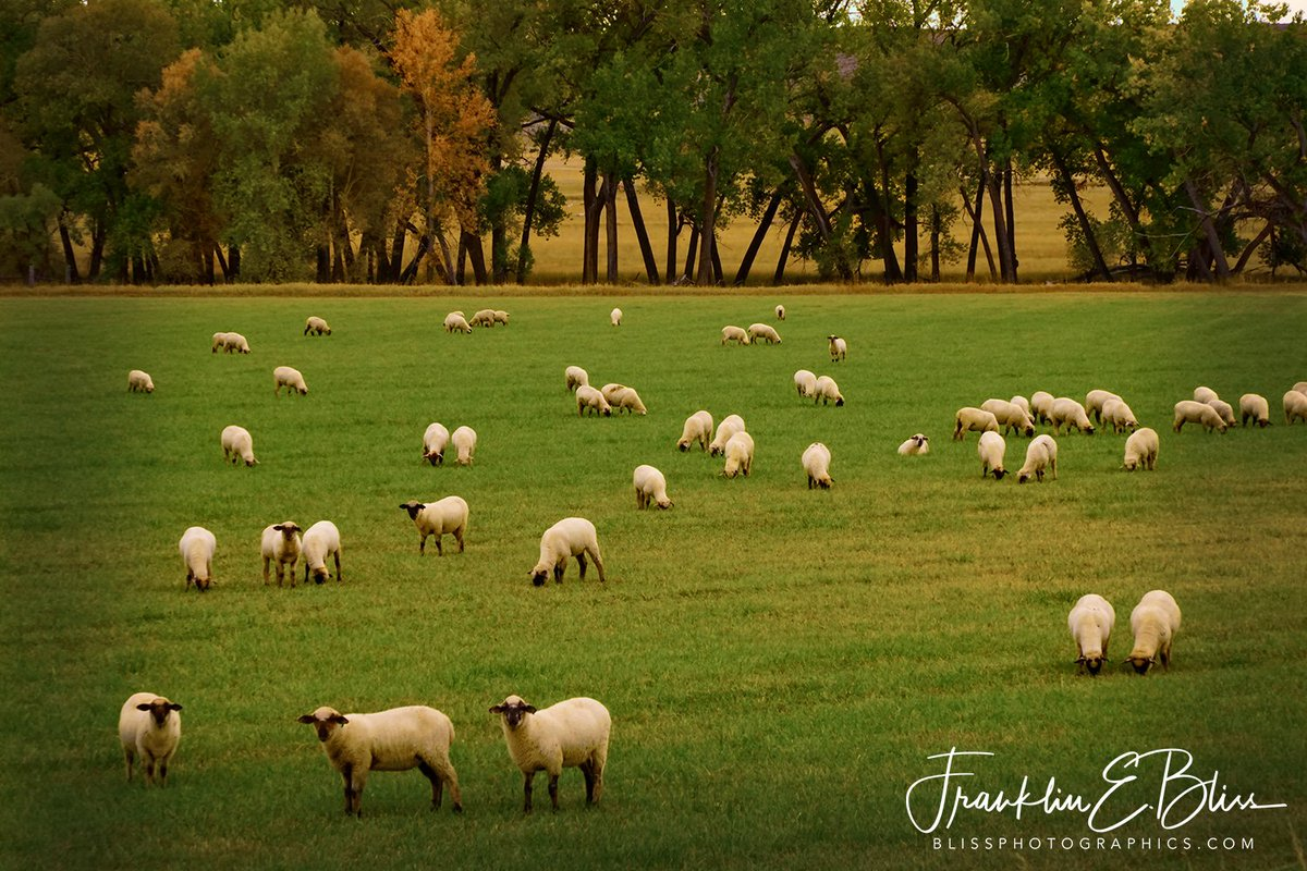 New post (#Wyoming Lawn Mowing) has been published on Bliss Photographics - https://t.co/cwfJdRl5M2 #Bliss #BlissDinosaurRanch #BlissPhotographics #BlissRanch #Borderlands #Farm #FarmAnimals #GrassyField #Hedgerow #LawnMowing #Ranch #Sheep #Treeline #WyomingLawnMower #Animals https://t.co/S4OThHz4B3