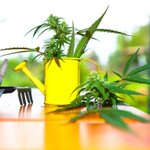 Image for the Tweet beginning: Tools Every #Cannabis Grower Should