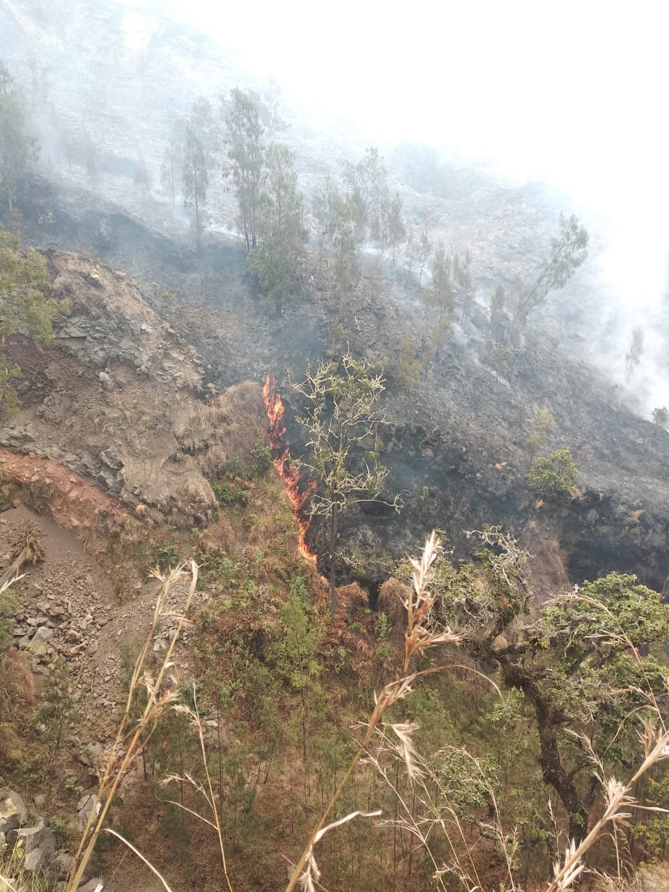 Kebakaran di Gunung Rinjani
