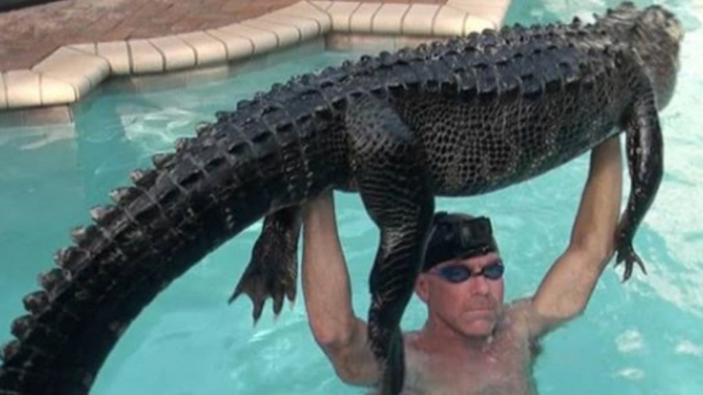 Florida man jumps in swimming pool to remove nearly 9-foot gator ketv.com/article/florid…