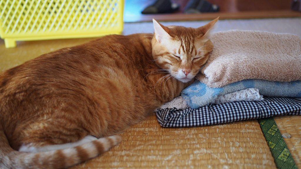 お昼休みワーママはるさんのvoicyを聴いて✅2019年のやりたいことリスト✅2019年のやりたくないリストを作成してみた🐈改めて自分を見つめ直すきっかけになりますね午後も頑張りましょ🐈🔥🔥🔥#茶トラ #猫のいる暮らし #カメラ初心者 #猫写真 #Voicy