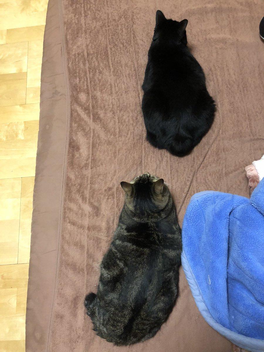ジワジワ距離を詰める勇氏!我が家の若手2名すぐそこ肥満組!みなさん、ゆっくりおやすみなさい😴1日お疲れ様でした😊