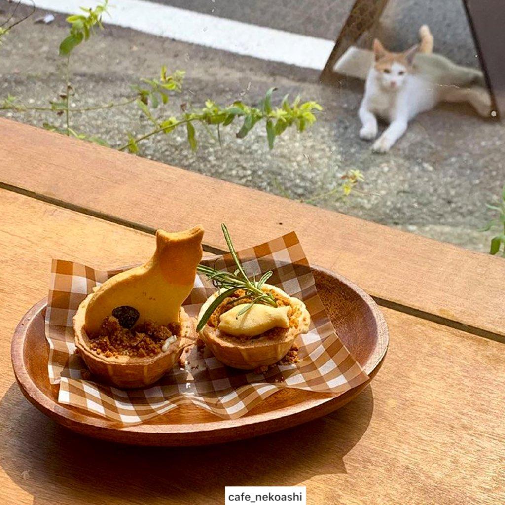 คาเฟ่น้องแมว Neko Ashi เจ้าของอบคุ้กกี้รูปแมวซึ่งเป็นมาสคอตของที่ร้าน เสิร์ฟเมนูขนมหวานน่ารัก พายฟักทอง พายแอปเปิ้ล พ็อตพาย ภายในร้านขนาดเล็กตกแต่งน่ารัก อยากให้มีร้านแบบนี้แถวบ้าน จะไปนั่งหมกตัวอยู่ในทุกวันที่ฝนตก #รีวิวอินชอน @Review_korea #เหมียว  📍 https://t.co/HMYSg8acI3 https://t.co/ScXKh4m6Mz