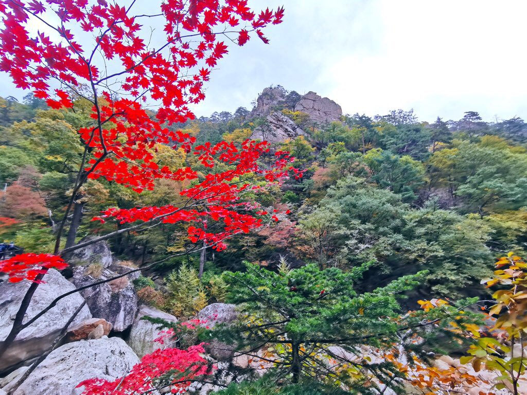 🌱 log 10. day 02. 📍 yongso falls hiking trail, seoraksan o r g a n i c ! 🍁 trees were slowly starting to change color! there weren't that many in full autumn bloom, but was able to find several along the path! 🥺 super beautiful 🙌 #DISSUDAILY
