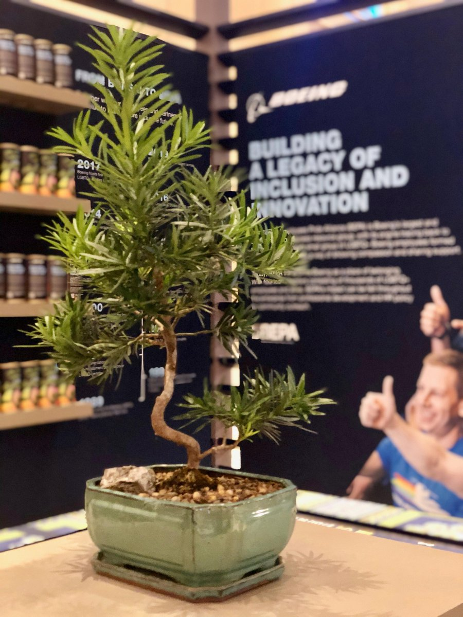 We're at #OESummit this week where our Bonsai Garden honors our first LGBTQ+ employee group. The tree reminds us of our progress and our employees' continued efforts to advocate for inclusion. #InclusionMakesUsBetter Read more: https://t.co/ewgK0ldNz4 https://t.co/eFO0DdWtKA