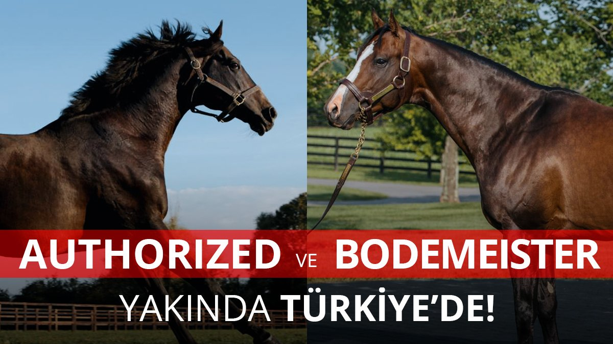 Bodemeister ve Authorized transferleri