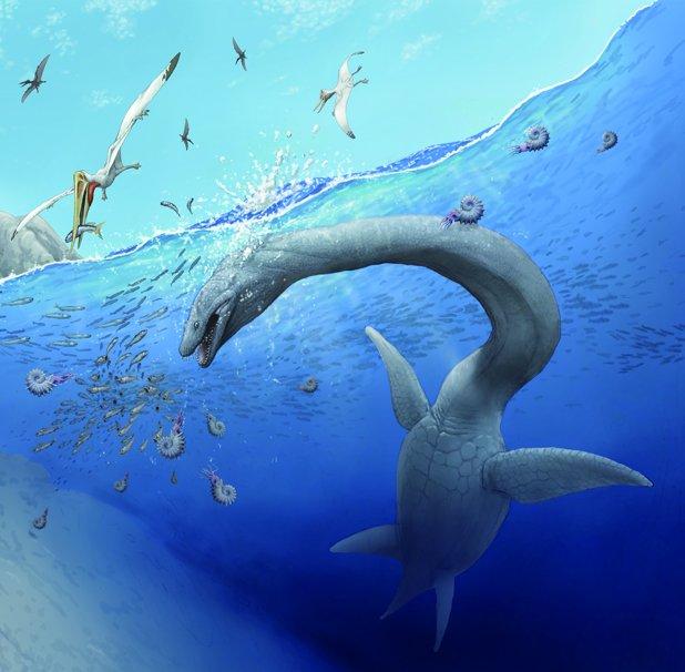 15年前に発見されたサツマウツノミヤリュウ(首長竜の仲間)の化石が発見された場所の鹿児島県長島町に寄贈その際に私の首長竜のイラストも提供しました。
