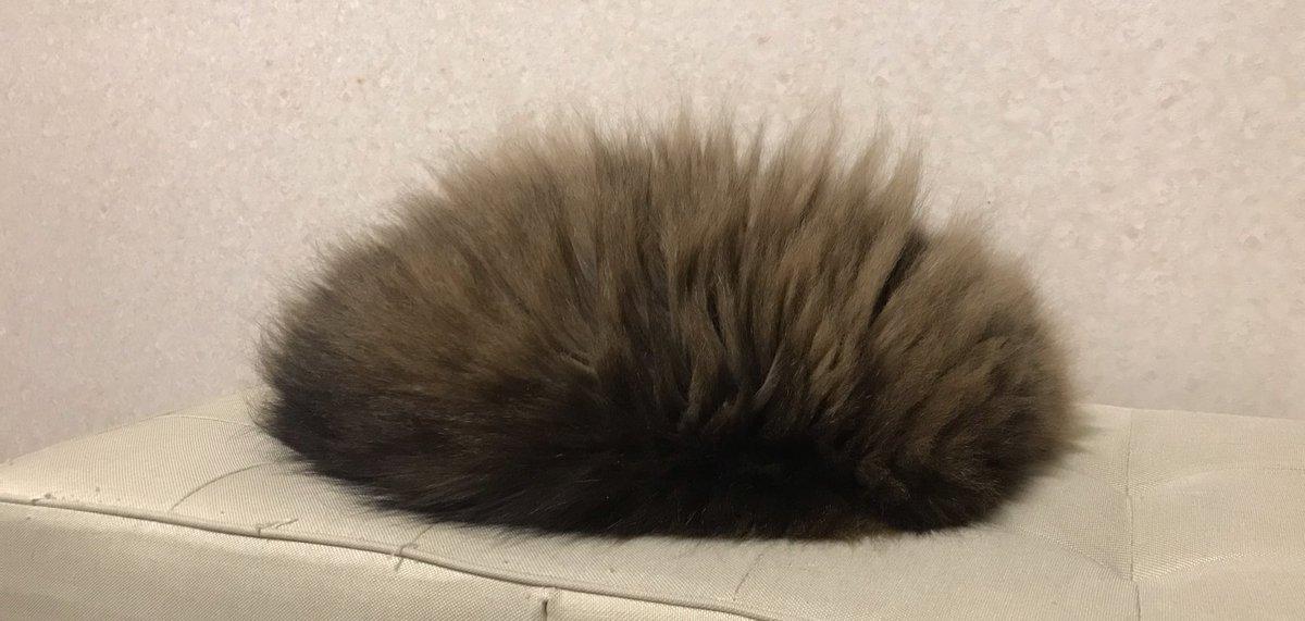 実家のネコさんが私を見てもリラックスしてるようで安心した。何か別の生き物になっているようにも見えるけど。