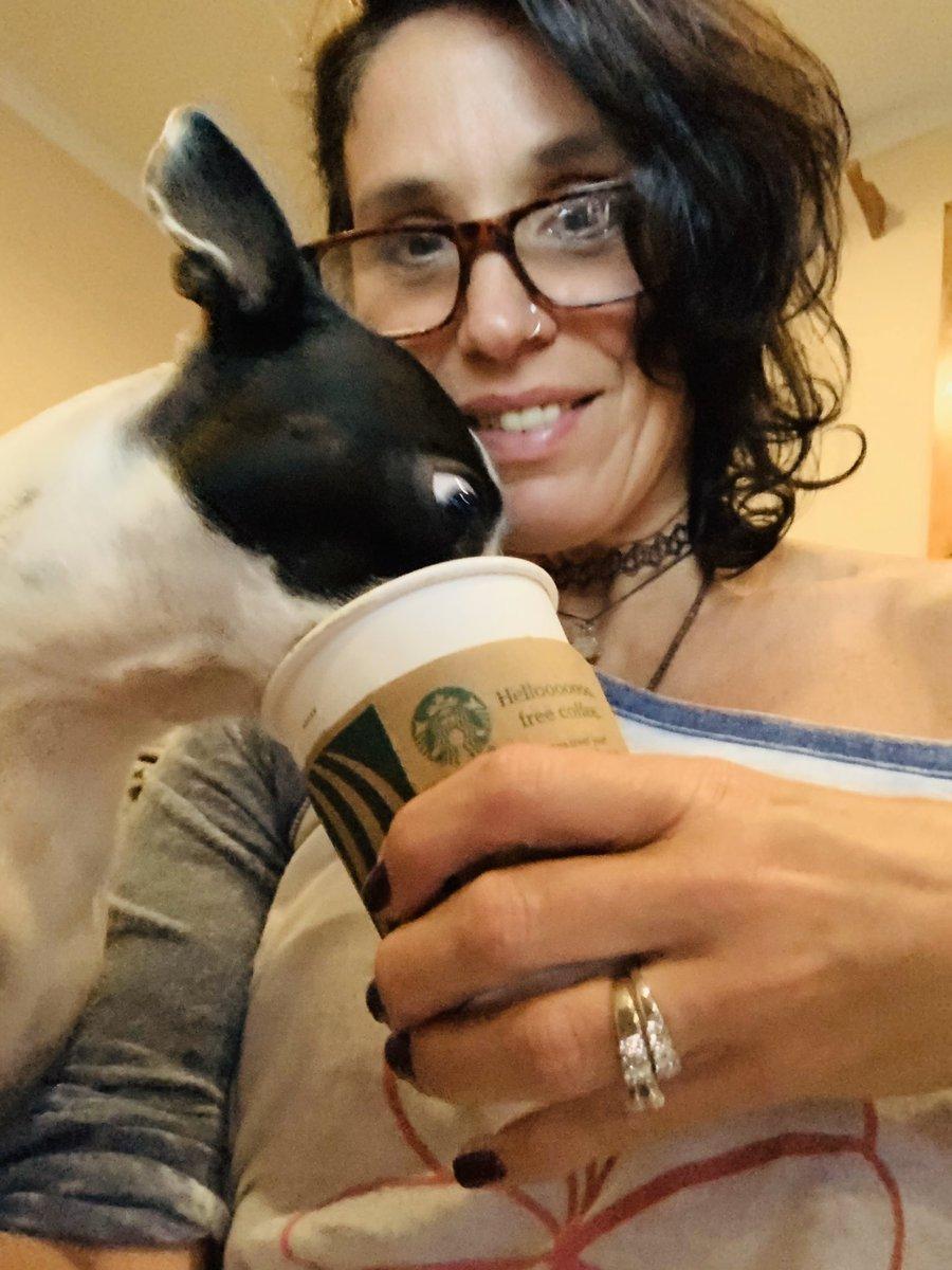 Cozy Friday feels. #bostonterrier #DogsofTwittter #dogsarejoy   <br>http://pic.twitter.com/ruyGEgtboW