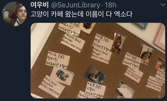 op went to a cat cafe and all of the cats were named after exo members   if you want to visit, the cafe name is 상자 속 고양이 and it's in seoul!  <br>http://pic.twitter.com/Hj4aFJVwxb