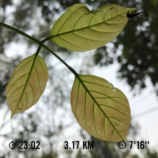 Ran 3.17 kilometres with Nike Run Club  Day1630 of #runningstreak #h_art  #run #running #nrc #nrcindia #morningrun #park #leaves #bokeh #garmin #beatyesterday