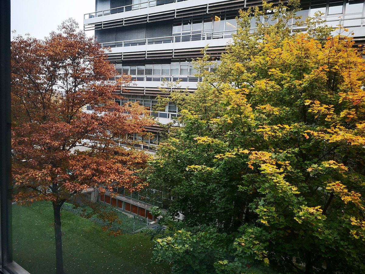 Rot oder gelb? Was ist eure Lieblingsfarbe im Herbst? #colorful #ILoveFall