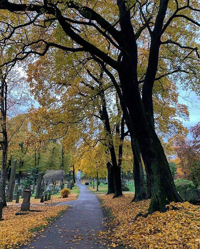 Many famous Norwegians such as Edvard Munch, Henrik Ibsen, Henrik Wergeland and Bjørnstjerne Bjørnson are buried at The Cemetery of Our Saviour (Norwegian: Vår Frelsers gravlund) 🍂 #oslo #visitoslo Photo: @rita_solfrid ift.tt/2Mth5Sn