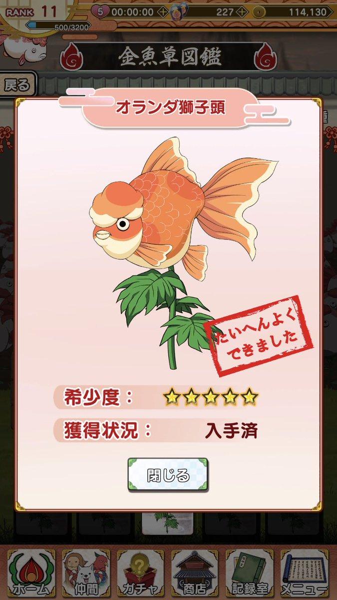 冷徹 金魚 の 草 鬼灯