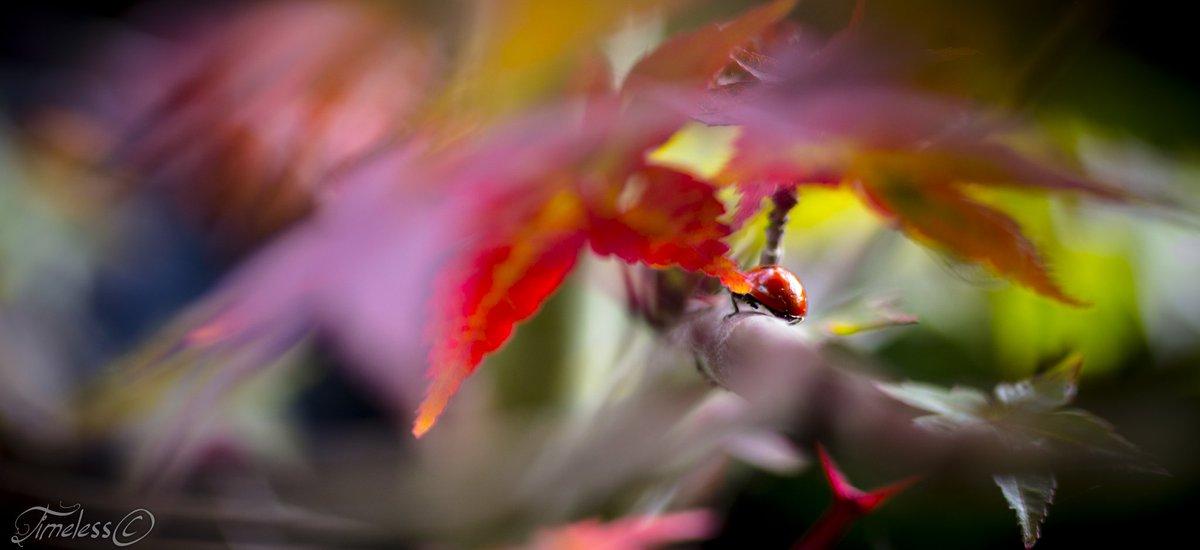 #photography #naturelovers #fall #photooftheday #PhotographyIsArt #TwitterNatureCommunity #insects #bokeh #amateurphotography #Canon #Sigma  I'll be on my way...... Fijne dag vandaag!