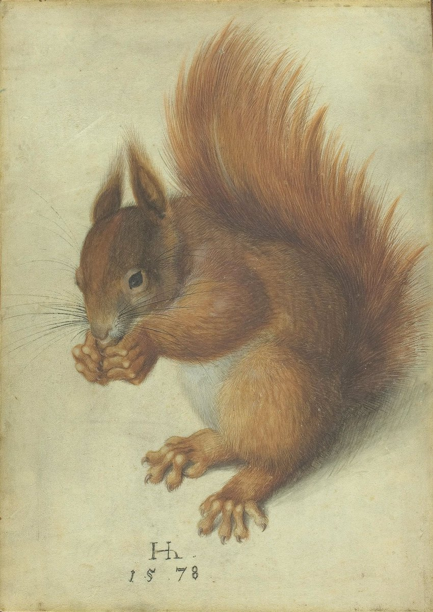2/2 A red squirrel, perfectly drawn in 1578 by Hans Hoffmann. Today is his day.
