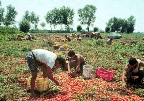 Più tutele dall'Inps per i lavoratori agricoli siciliani, esultano i sindacati - https://t.co/a2Jxv80GrK #blogsicilianotizie