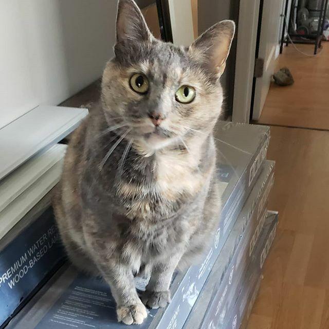 Ruby says #happycaturday #caturday #caturdaymorning #catsofinstagram #catsitter #catsittersofinstagram #kittydaycare #catsoftwitter #caturdayvibes #tortiseshell #tortisofinstagram #tortiecats https://ift.tt/32tbT6Apic.twitter.com/N6zukLOJf2