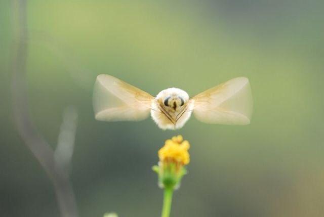虫嫌いの人でもきっと好きになれる?!とあるもふもふの虫が可愛いと話題に!
