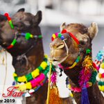 Image for the Tweet beginning: The #PushkarFair is an annual