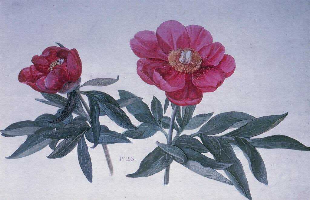 2/2 Two peonies. By Hans Hoffmann, whose day is today.