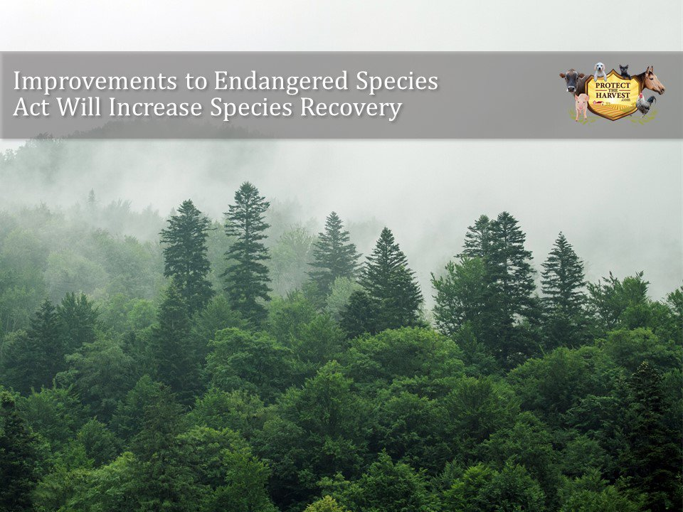 The #Endanged #Species Act must be revised so it can actually save #animals. Link:  #ESA #FWS #supportchange #wildlife #wildanimals #publicland #protectedanimals