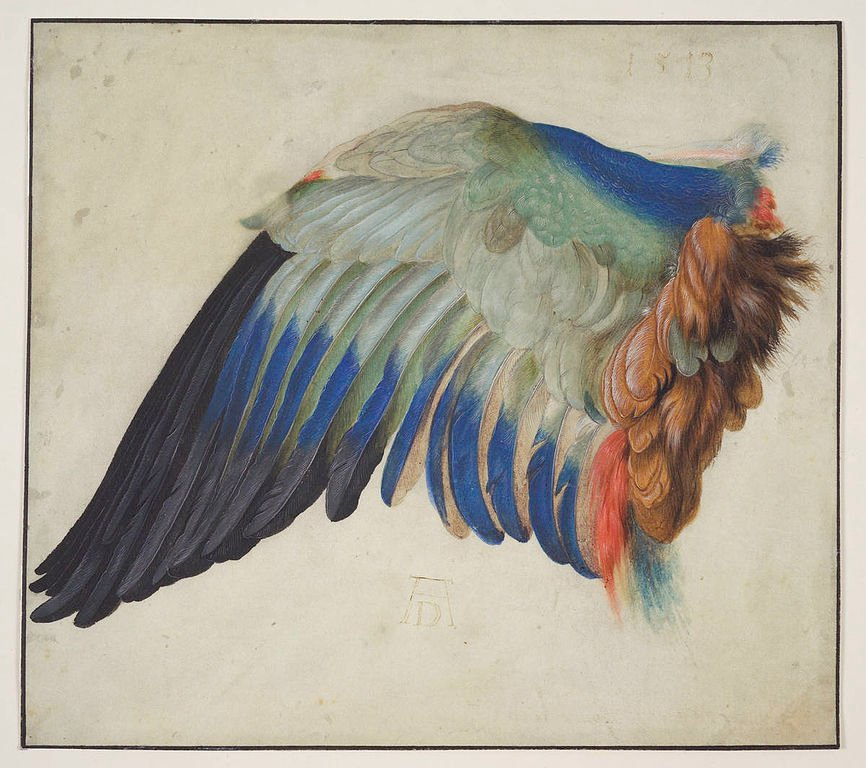 Wing of a blue roller. After Albrecht Durer (of course) by Hans Hoffmann, whose day is today.