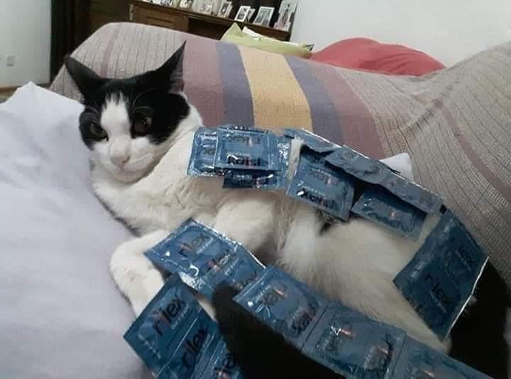 Ese gato tiene encima el equivalente a un departamento en palermo