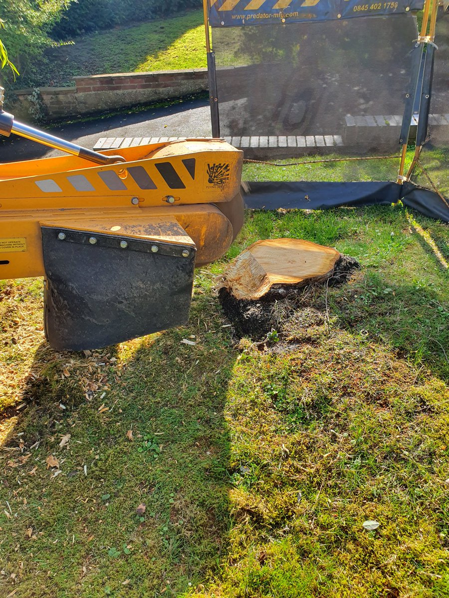 Essex tree stump grinding removing various tree stumps at Wendons Ambo,near Saffron Walden, Essex. Including Silver Birc…