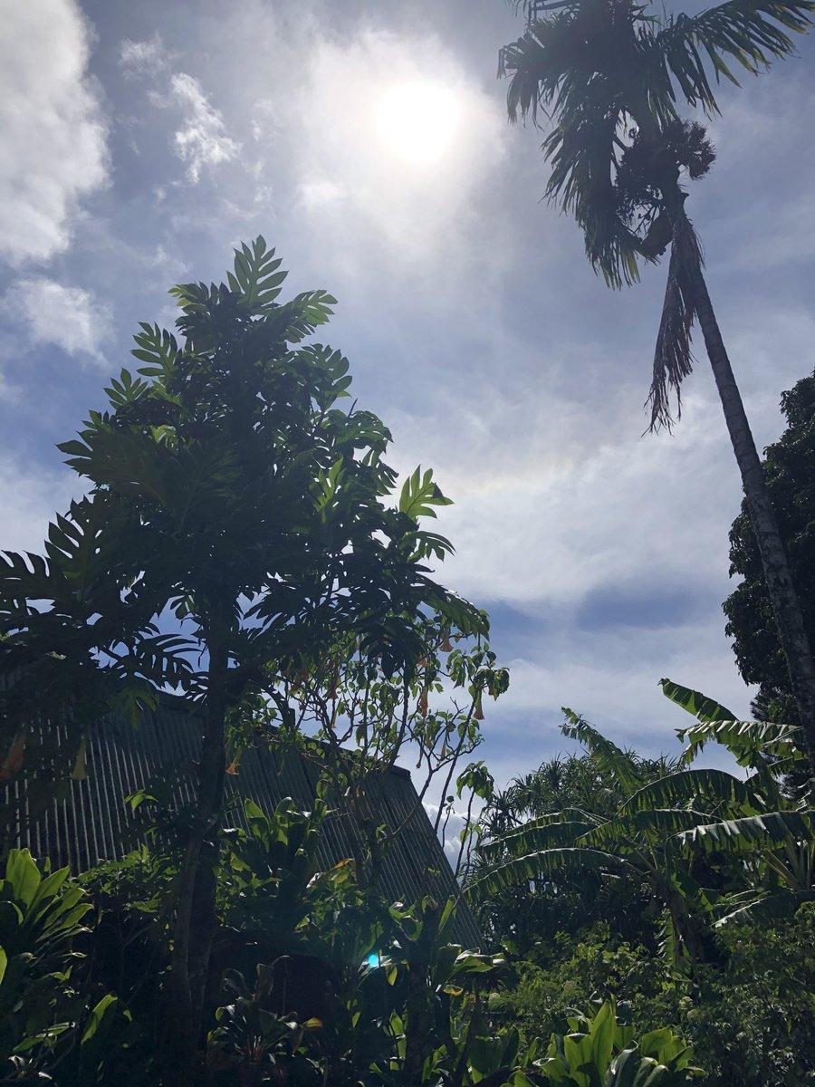 test Twitter Media - Warm and hazy in Haiku. #cmweather #Maui #Haiku #ulu #Mauinokaoi https://t.co/PFEPmy4oHc