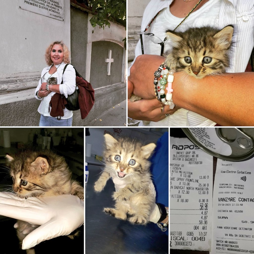 Today I went to the Bellu cemetery at a parastas.Found this miracle abandoned at the tomb of Father Constantin Nazarie,therefore it will be called Nazaria.Was with her at vet for control,internal,external deworming.  to paypal: gangelaraluca@yahoo.com Nazaria will thank you. <br>http://pic.twitter.com/CIymB4kvMT