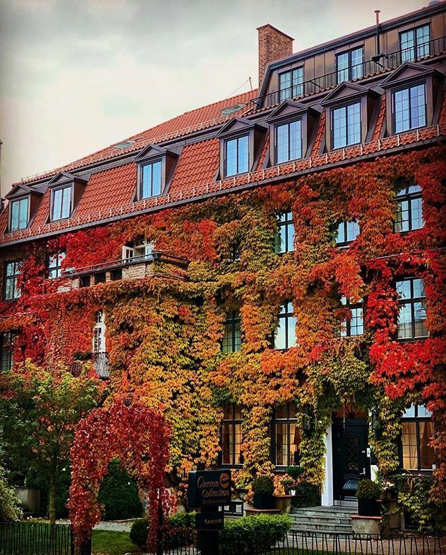 Fall in love with Oslo 😍🍂 #oslo #visitoslo Photo: @gudmund_risvig_stenersen ift.tt/2Mwv8qh