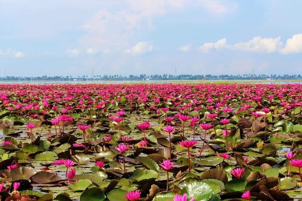 RT @KeralaTourism: It is that time of the year again; Malarikkal is in full bloom.   P.C: Shansil Khan https://t.co/I53DIwU0GK