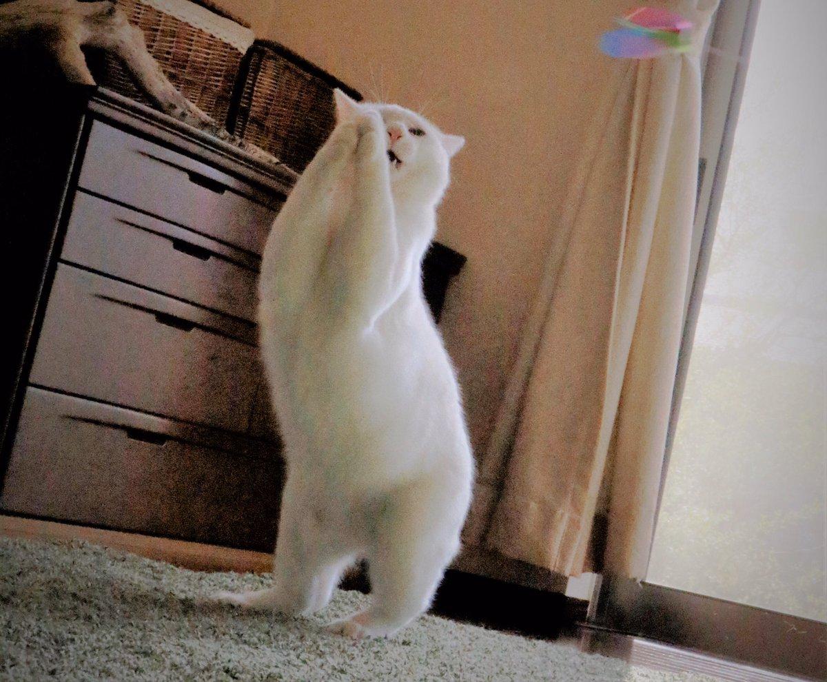 ラガーマン!?#五郎丸