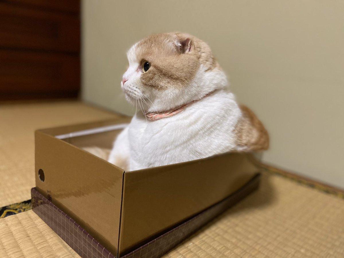 箱に入りつつ「まぶちぃ~」ってするうな氏