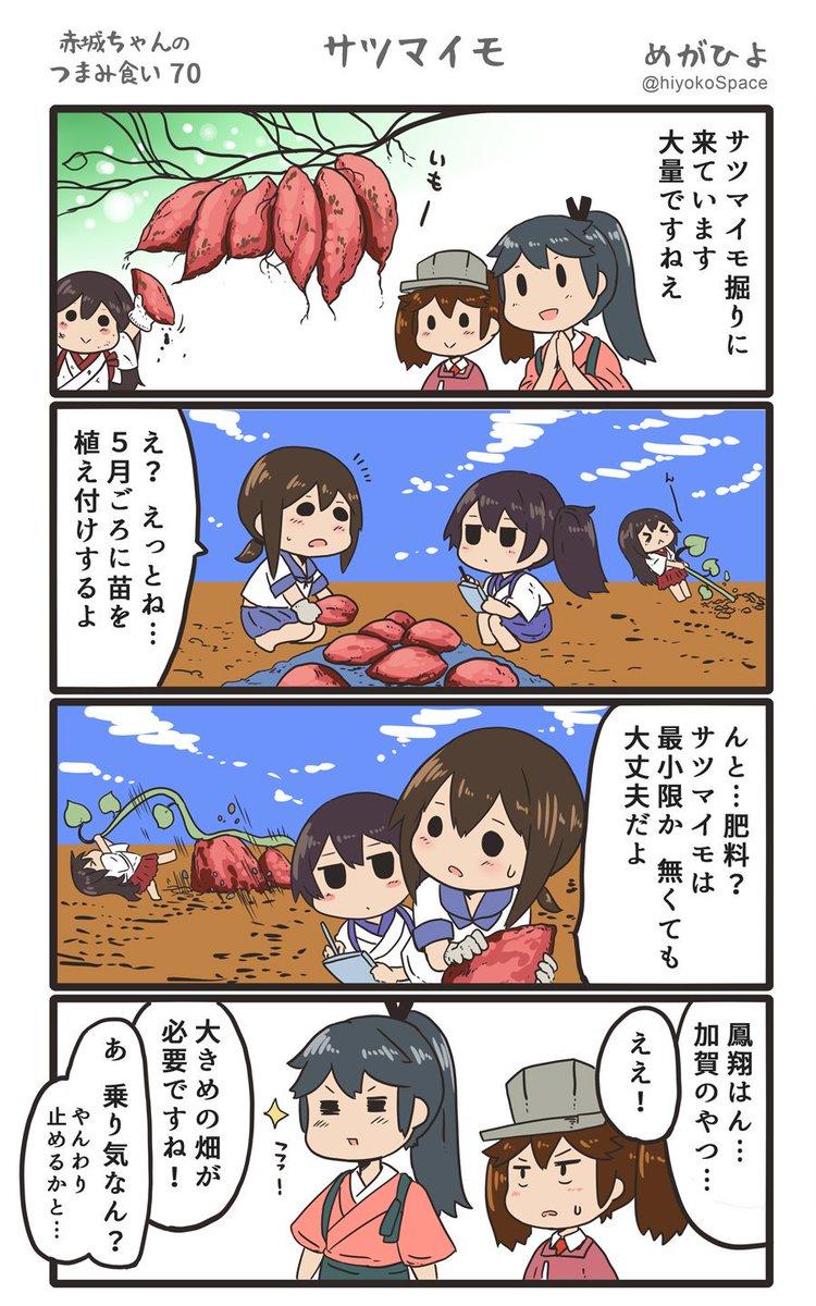 「赤城ちゃんのつまみ食い 70」 〜サツマイモ〜