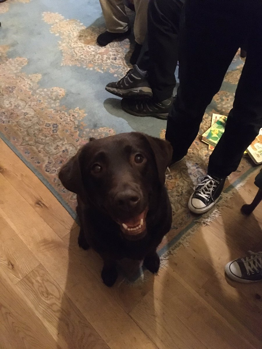 Take a dog to a party and she will assume it is for her #labradorable #belleoftheball