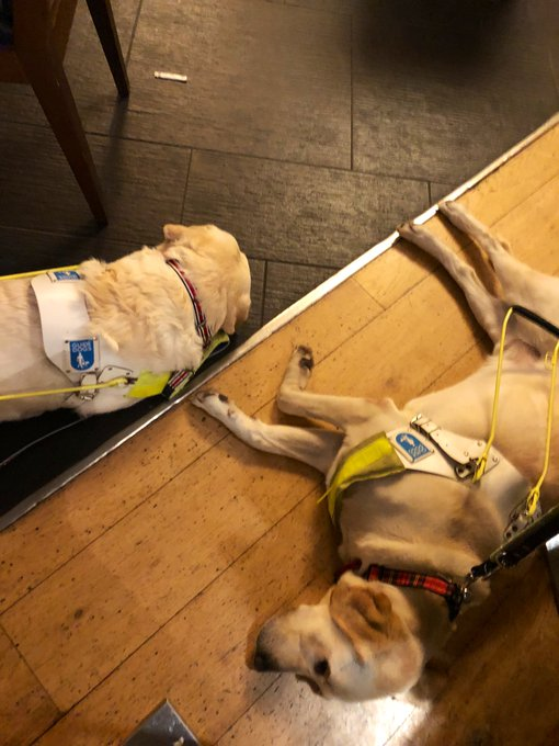 Jon and Amit's Guide Dogs are laying on the floor of the bar sleeping. Both are blonde labradors and both are in harness.