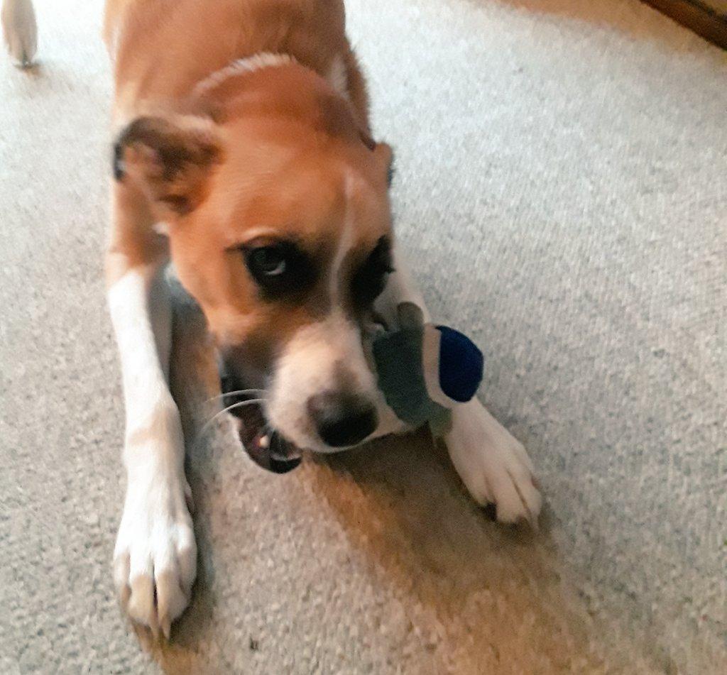 Action shot! @dogcelebration #SundayFunday #dogsoftwitter #dogsarejoy <br>http://pic.twitter.com/yJ4nuL4P17