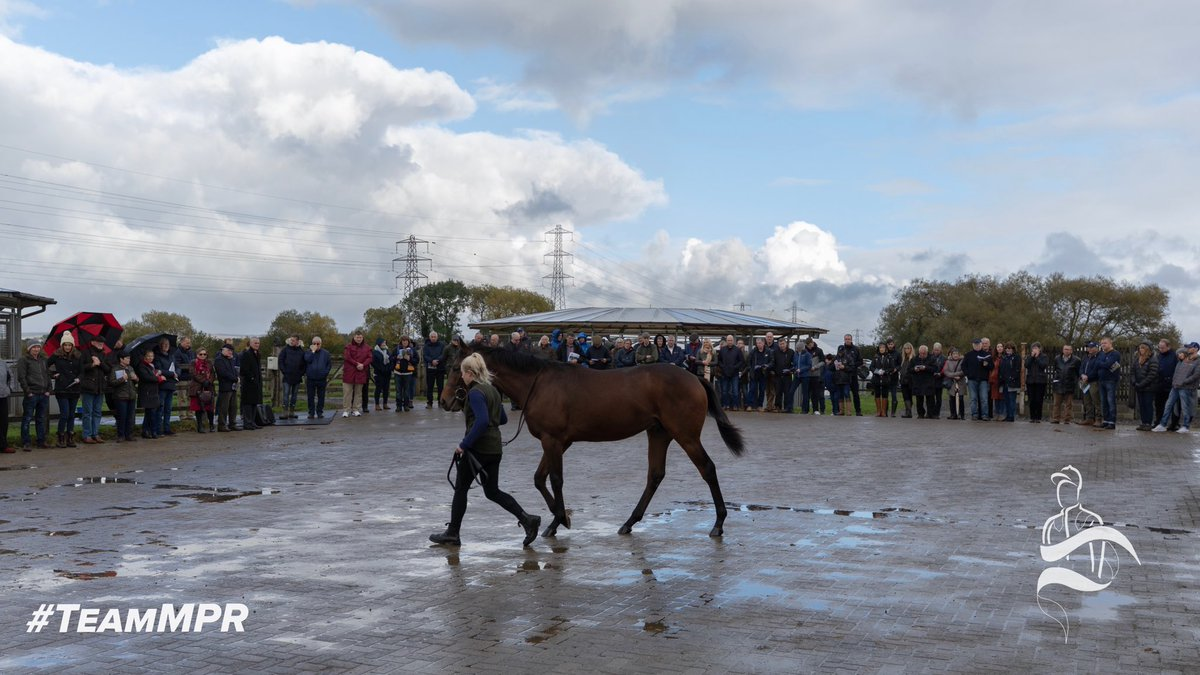 Thank you to everyone who came out to our yearling parade today! We hope you all enjoyed the day despite the weather. 🌧  #TeamMPR