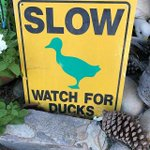 Image for the Tweet beginning: What the duck? Found this